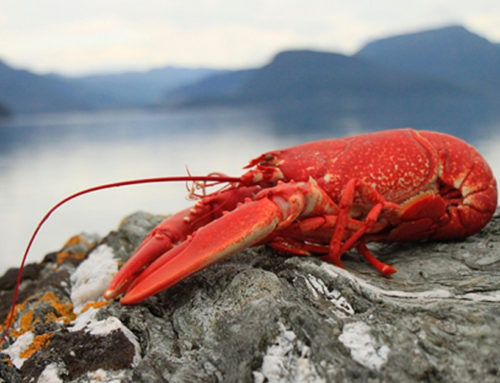 What the Lobster Taught Me About Stress